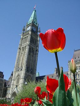 Tulips_and_the_Peace_Tower