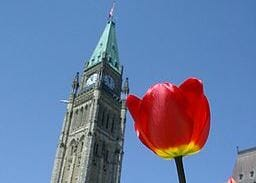 Tulips_and_the_Peace_Tower cropped